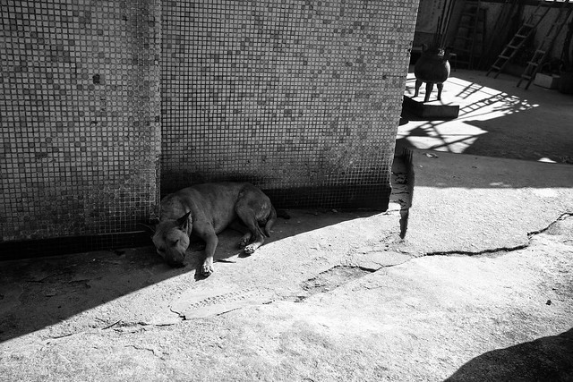 Dogs at the street 10
