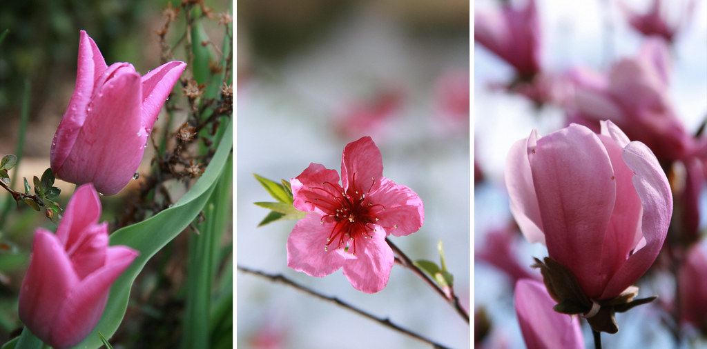A triptych of pinks