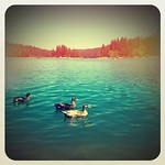 Ducks on the lake. #summer #california #slypark