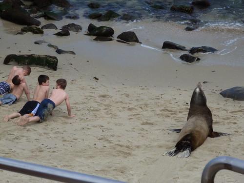 CA - SD  3-19-12 060 Kids Copy Seal on Beach