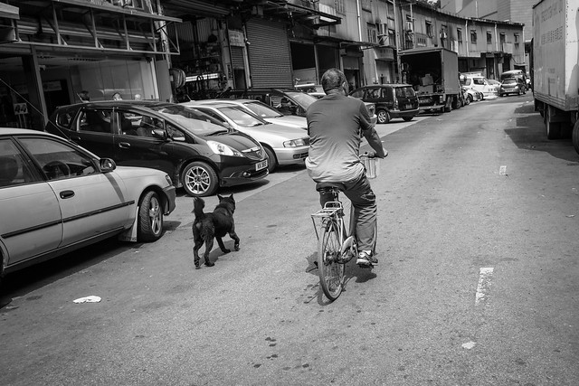 Dogs at the street 6