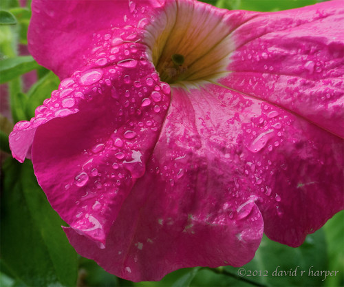 07.20.2012 :: 366/202 ...::... Pretty in Pink by Echo9er