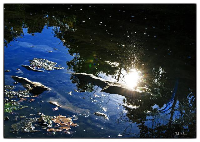 Buffalo River Sunlight