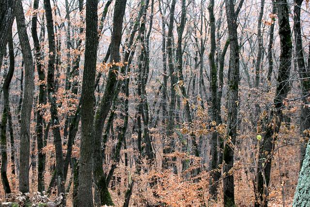 Deseo de bosque