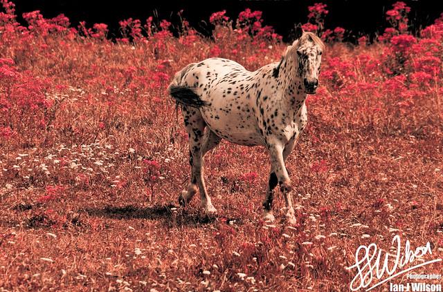 Martian Horse