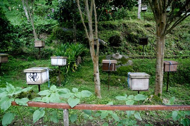 bee farm boxes