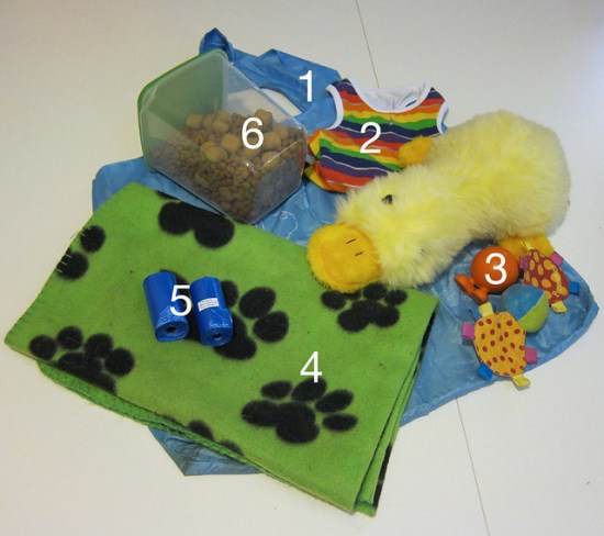 What's In Kichou's Bag?