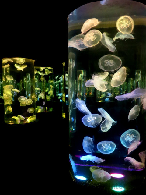 Manila Ocean Park - jellyfish-006