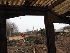 Bérengère, corvée de bois