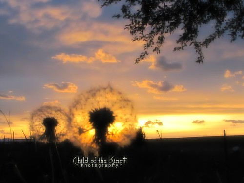 Dandi Sunset by Child of the King Photography
