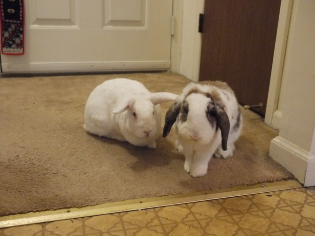 gus and betsy would like some treats now, please
