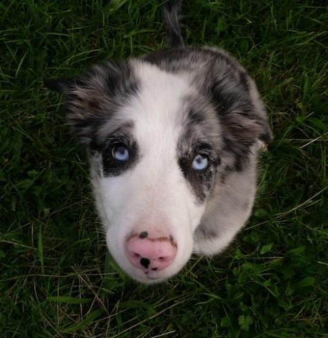 Blue-eyed baby boy