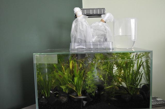 2012-11-03 fish 02
