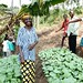 Growing as a community in rural DR Congo