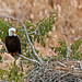 Bald Eagle's Nest
