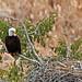 Bald Eagle's Nest