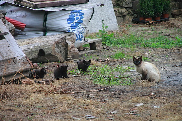 La Familia Gatuna #Photography #Flickr #Foto  37