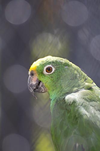 chainat birdpark 2