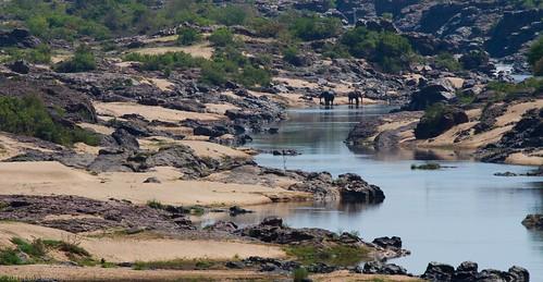 Kruger Landscape with Elephants