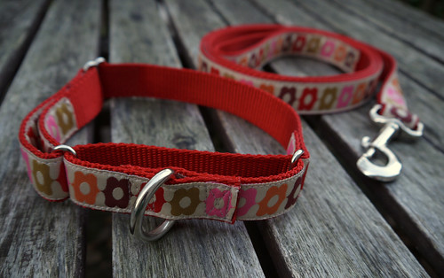 Martingale Collar and Leash