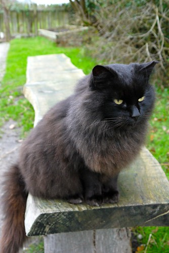 The local Styal cat