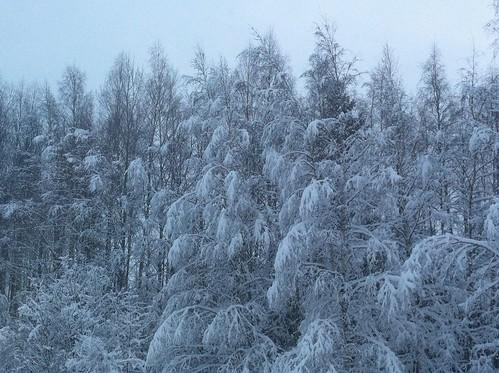 Talvinen metsä by niini