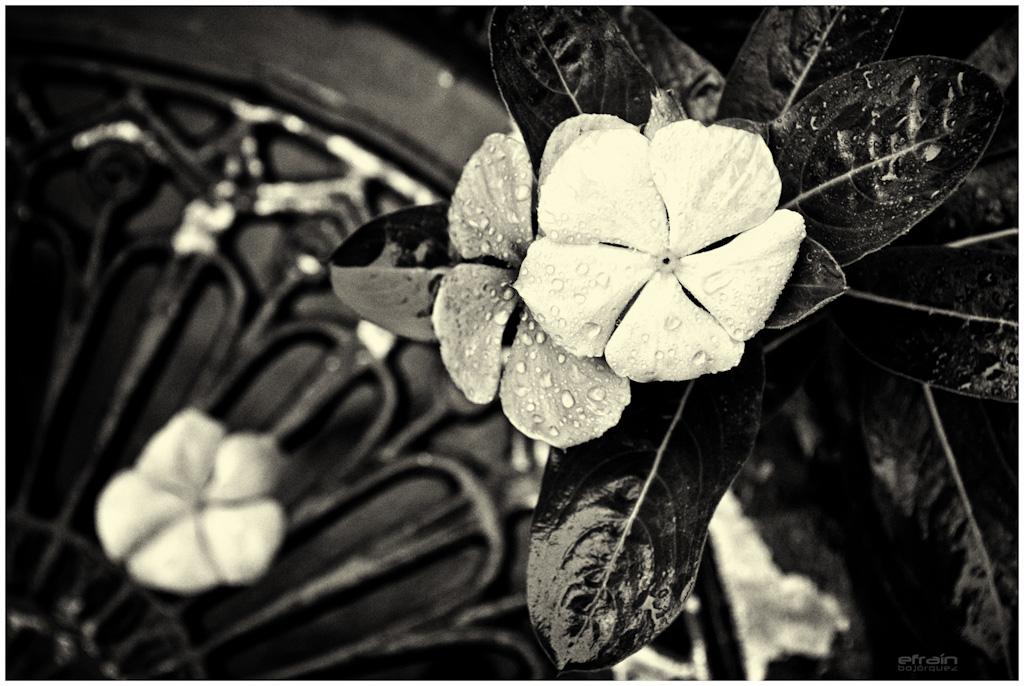 2012-02-09: Para no morir solo