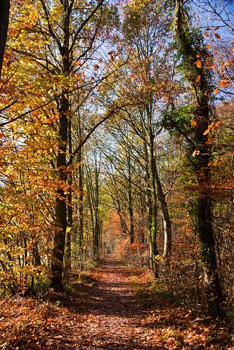 Path in autumn's beauty