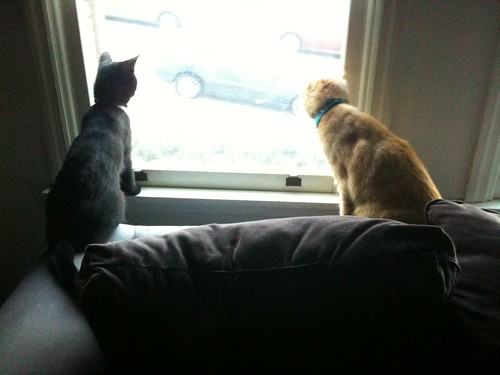 Watching Birds
