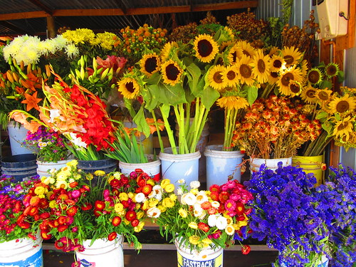 Flores en el camino by luz y mandalas