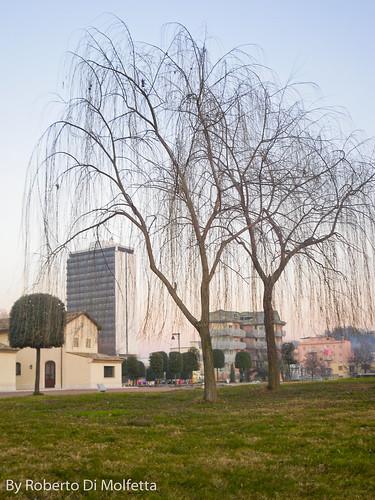 Alberi e grattacielo sullo sfondo by robertodimo