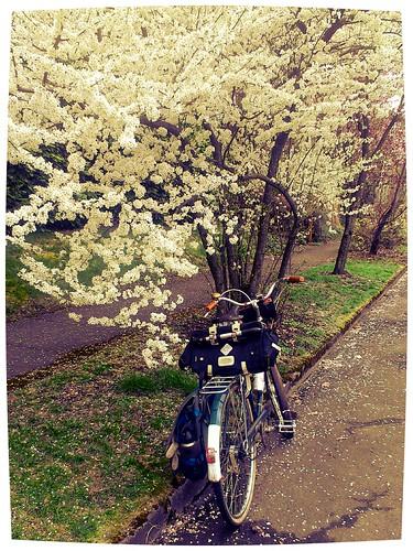 The Wayfarer in spring. by urbanadventureleaguepdx