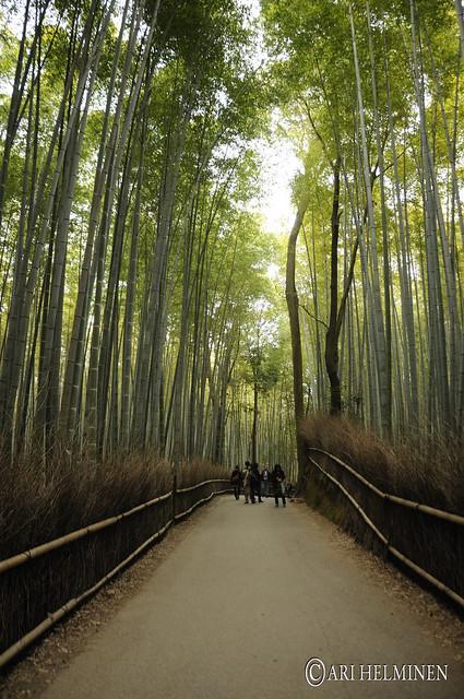 Bamboo forrest! 竹林の道