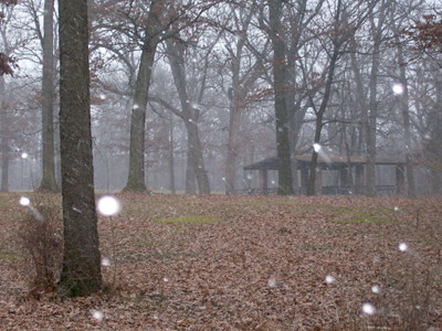 20120101_willow_springs_woods2