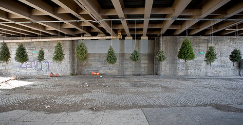 Installation of discarded Christmas trees under the BQE, Williamsburg, Brooklyn. 2012