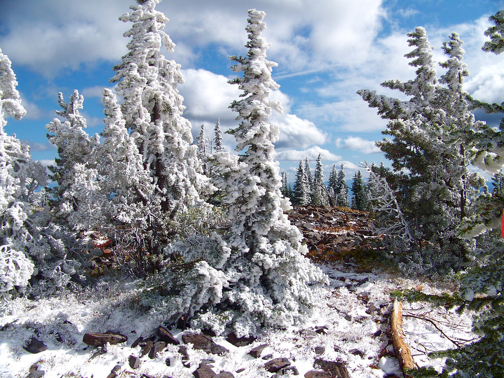 Snow covered trees on Baldy Mountain