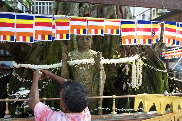 A man watering the holdy Bodhi Tree