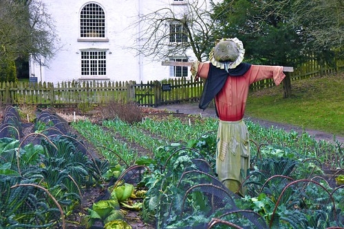 Veg Patch and Scarecrow