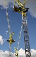 Cranes over Rundle Park