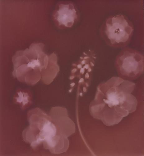 Color toned Lumen print