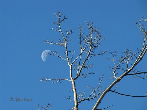 The Moon & The Tree