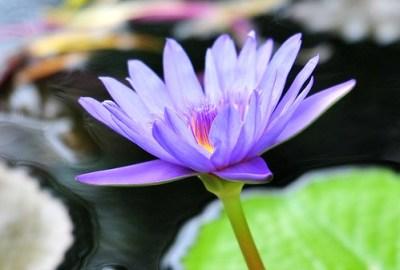 Hawaii flower 19