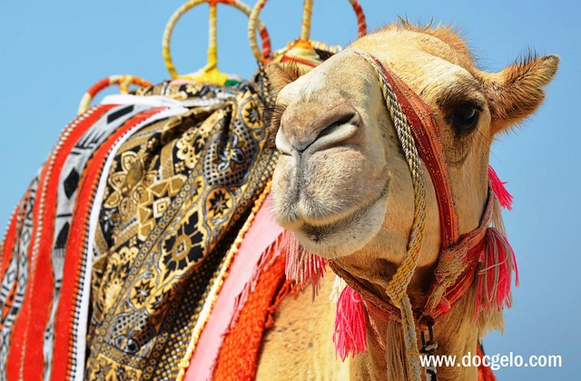 Jumeirah beach dubai camels and sandcastles beyond toxicity 7 thecheapjerseys Images
