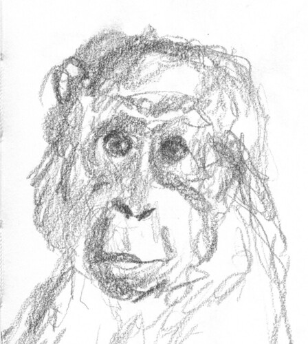 portrait of a monkey by husdant