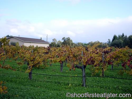 Corison Winery-2