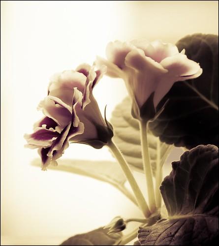 Flowers in the garden by SkyStrike