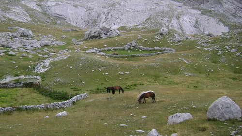 Horses at Gropa e Kopricshtes mountain hut