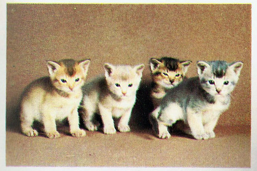 bookofthecatsabylittercolours0041