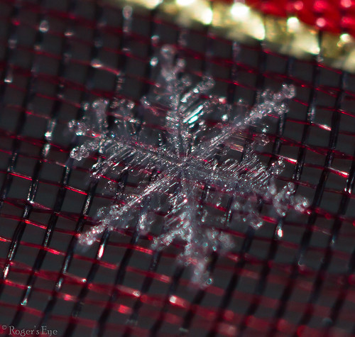 Snow Flake Macro 009 by Roger's Eye