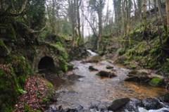 Clywedog Valley Walk